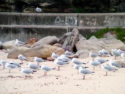 Bondi Beach12