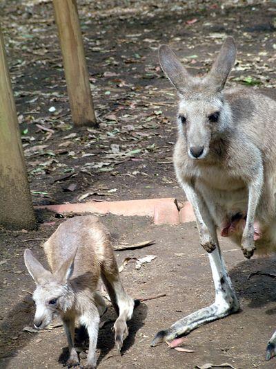 Koala Park12