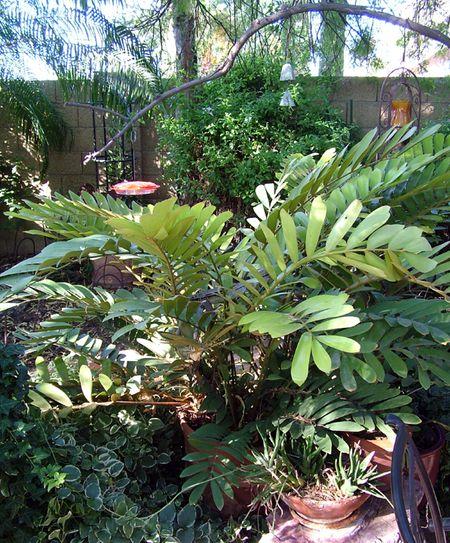 Yum-Yum Cardboard Palm