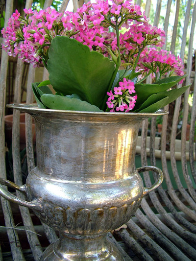Wine_cooler_and_kalanchoe