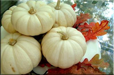 White_pumpkins