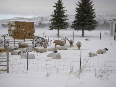 Idaho_snow3