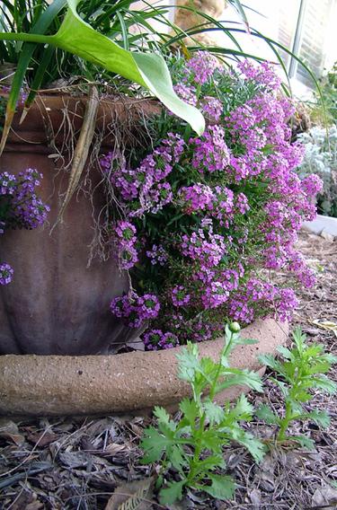 Garden_3508_2