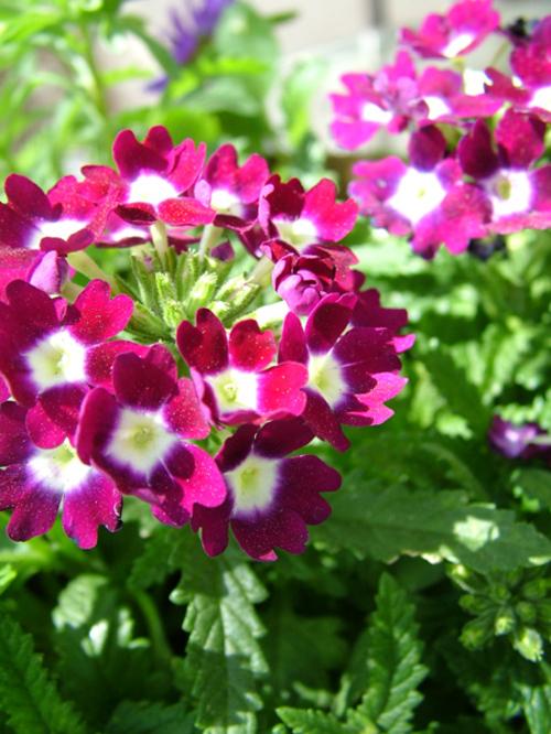 Garden_3152