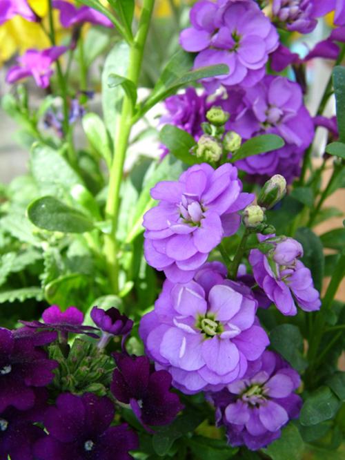 Garden_3153