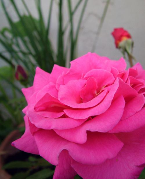 Garden_3154