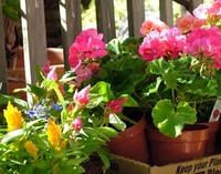Garden_flowers_2
