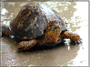 Turtle_with_tude_copy